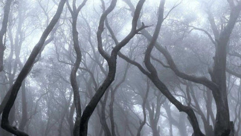 מהרהרת: טיול ביערות